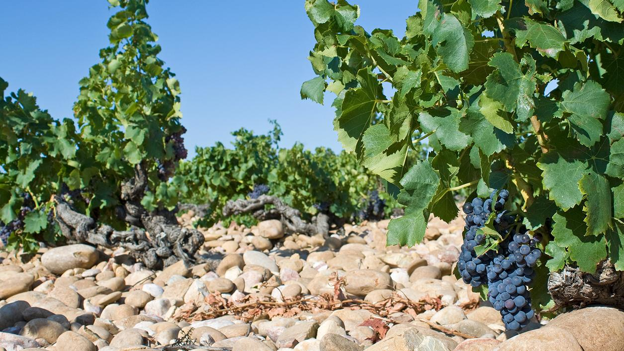 Massive Rhône Valley Wine Fraud Reported by French Authorities