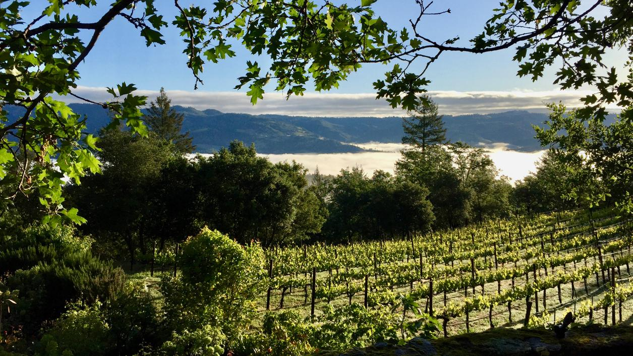 Napa's Long Meadow Ranch Buys Stony Hill Vineyard Winery
