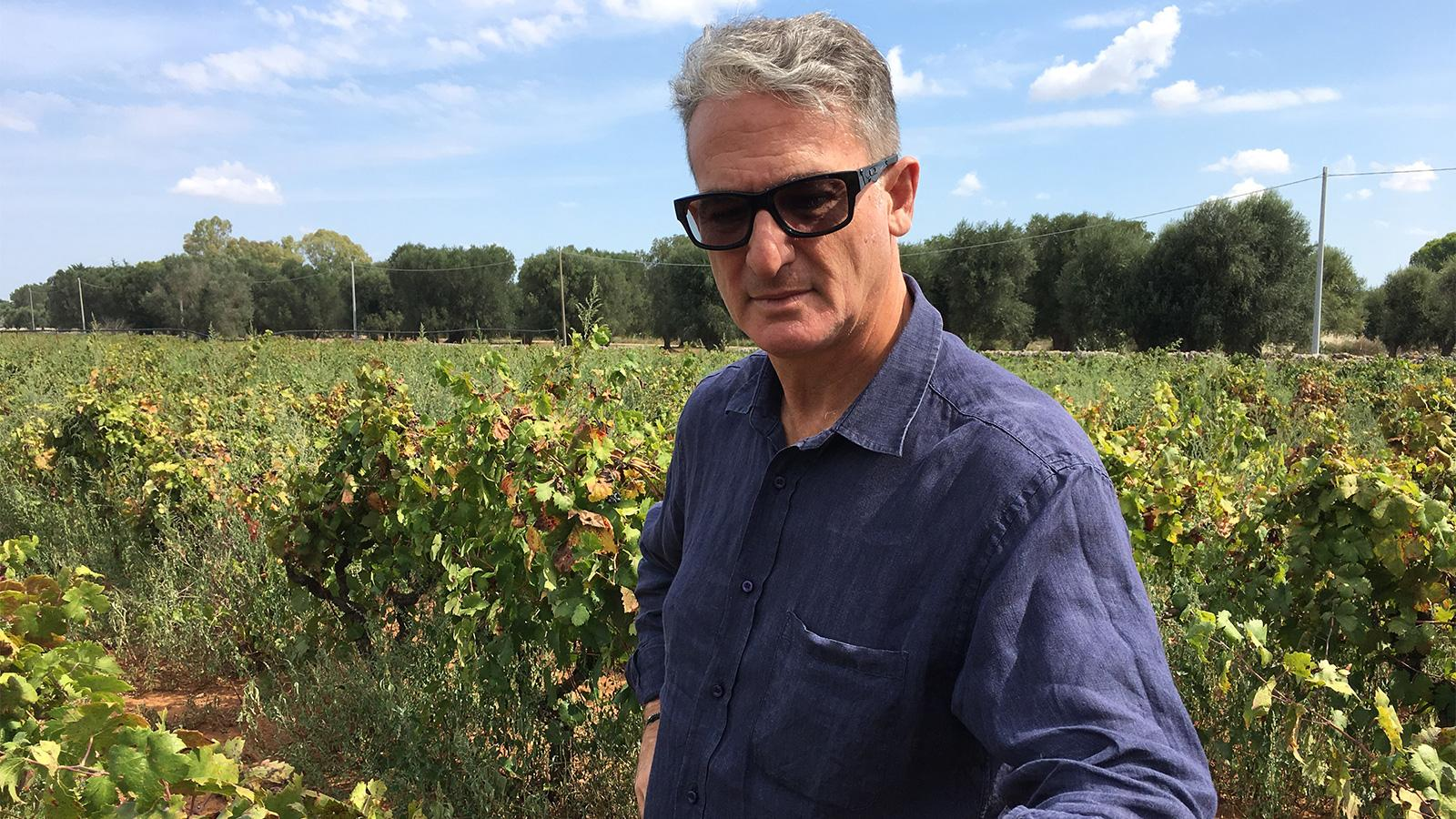 Gianfranco Fino tends his jungle of Primitivo vines in Puglia.