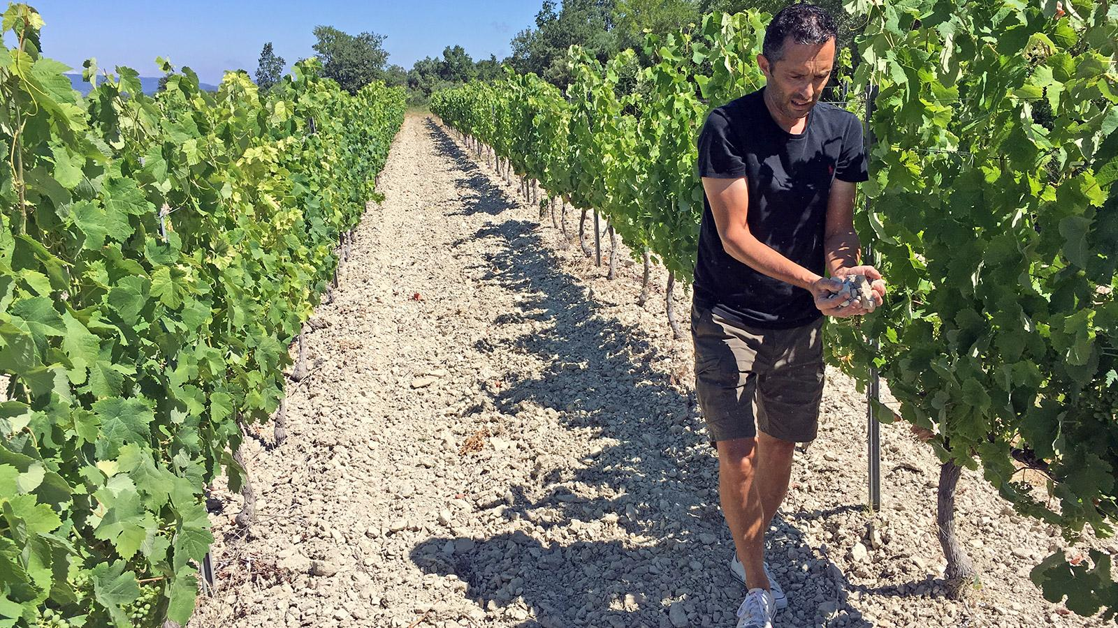 Sébastien Vincenti aims to highlight Ventoux's distinct areas and soils, such as the chalky hills where he grows white varieties.