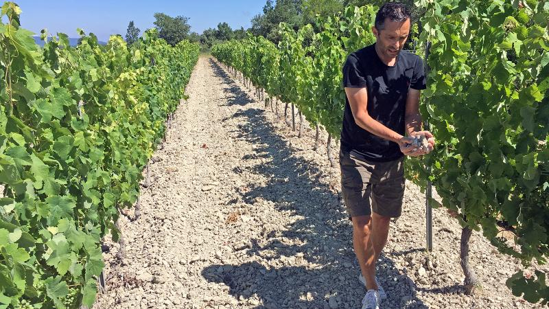 Image for an article: Sébastien Vincenti aims to highlight Ventoux's distinct areas and soils, such as the chalky hills where he grows white varieties.