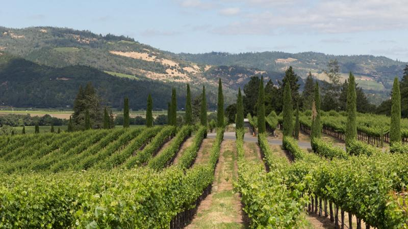 Castello di Amorosa is a popular destination for tourists exploring Napa wine country.