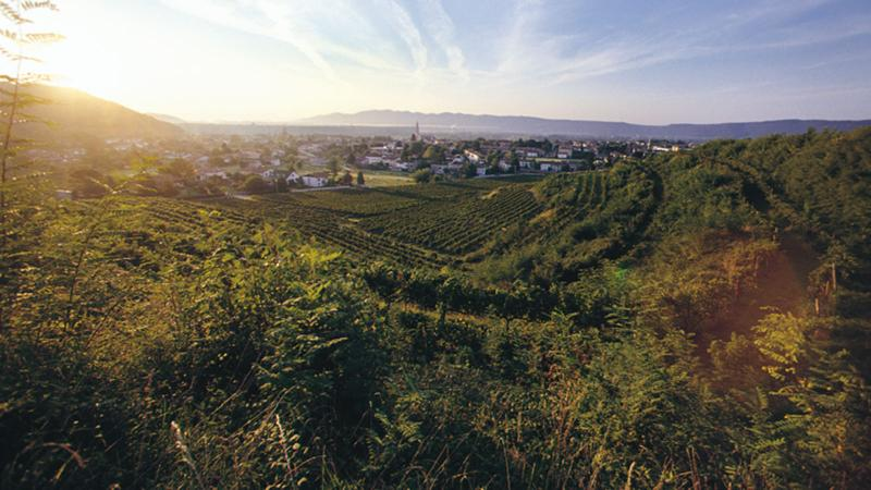 Attems makes distinctive wines from the Collio region of Friuli in Italy.