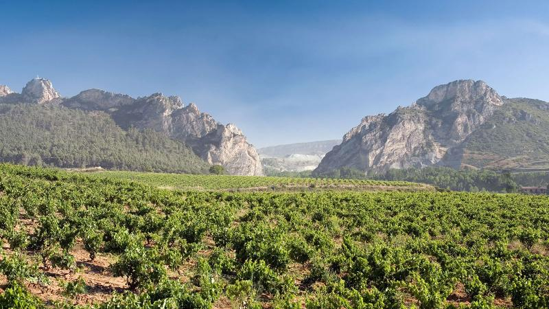Bodegas Bilbainas makes a range of great-value wines from different vineyards in Rioja.