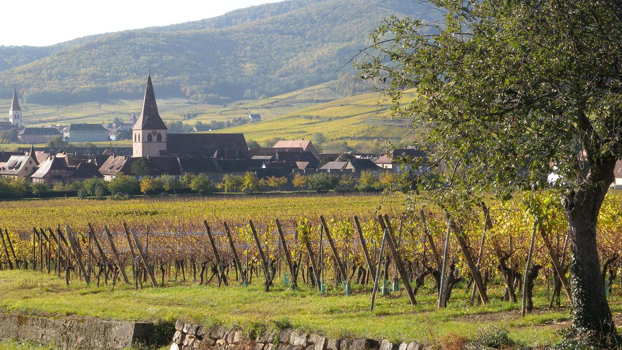 6 Alsace Essentials for French Wine Lovers