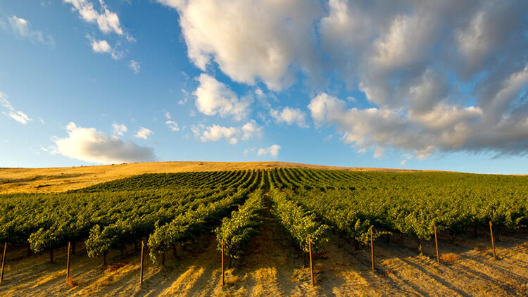 Tasting Highlights: 10 Top Pacific Northwest Reds