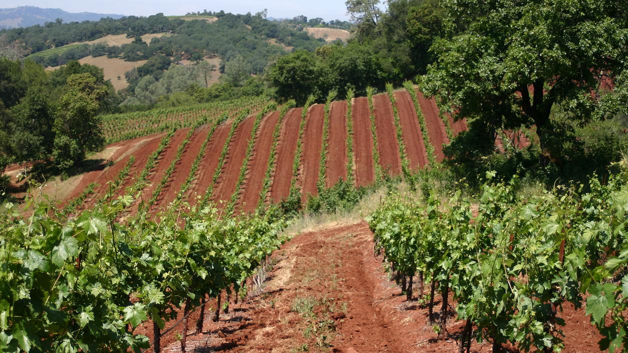 8 Sonoma Reds for All Occasions