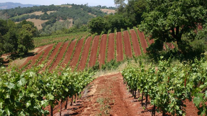 Dashe's Todd Brothers Ranch vineyard was planted in 1958 and grows in red volcanic soil in Alexander Valley.