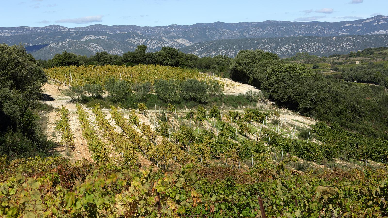 8 Go-To Languedoc Values