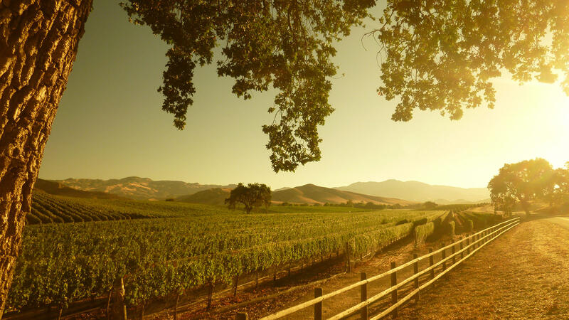 Dragonette is a leader of high-quality Syrah in Santa Barbara County.