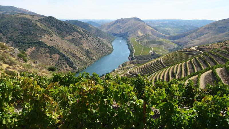 Duorum has vineyards in the Cima Corga and Douro Superior subregions of the Douro Valley.