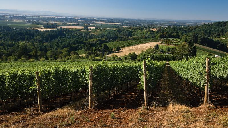 Erath is a name to remember for great-value Oregon Pinot Noir.