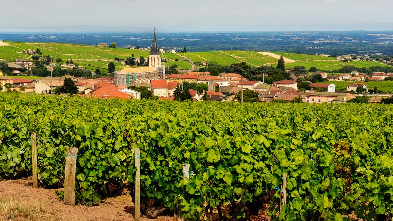 The village of Fleurie is home to several of today's picks.