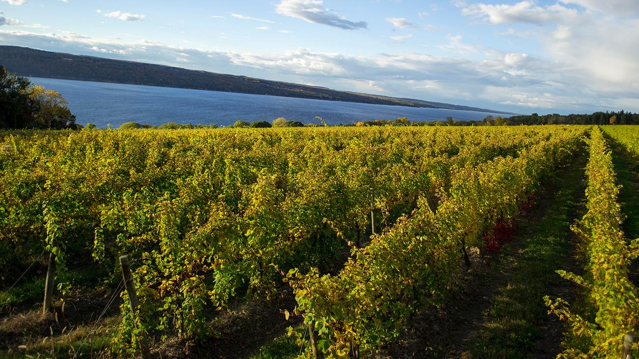 12 Delicious Rieslings from Around the Globe