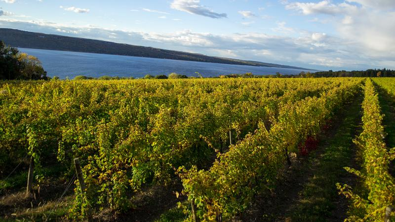 Forge is a Finger Lakes project started by the Rhône's Louis Barruol and two partners.