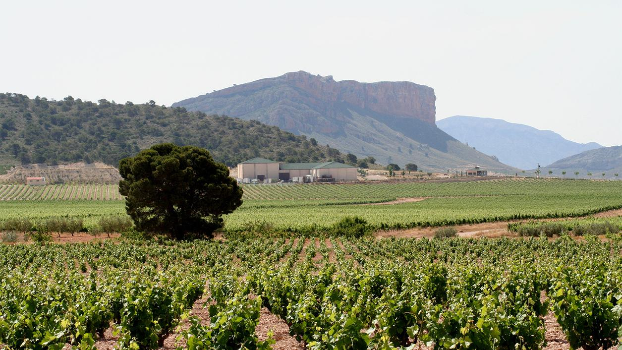 6 Shining Spanish Wines at 90+ Points