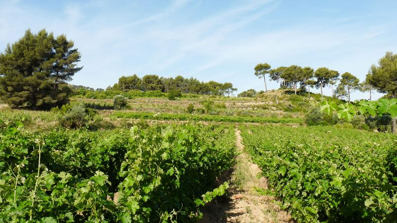 Gueissard makes a range of wines from Provence in southern France.
