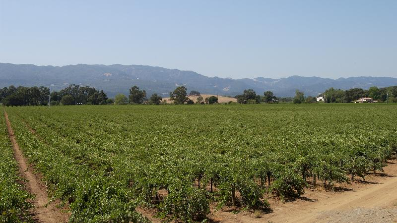 Heitz is best known for its Cabernet Sauvignon, but the Napa winery also makes a juicy Sauvignon Blanc.