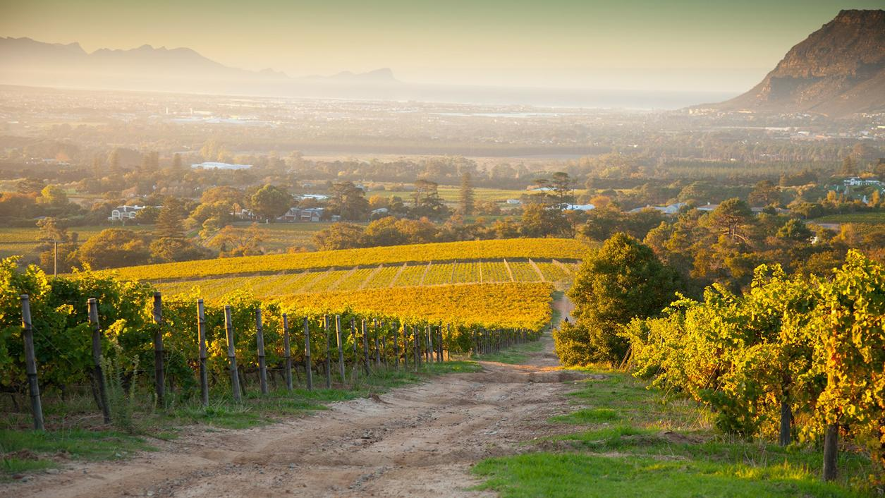 7 Staples of South African Wine