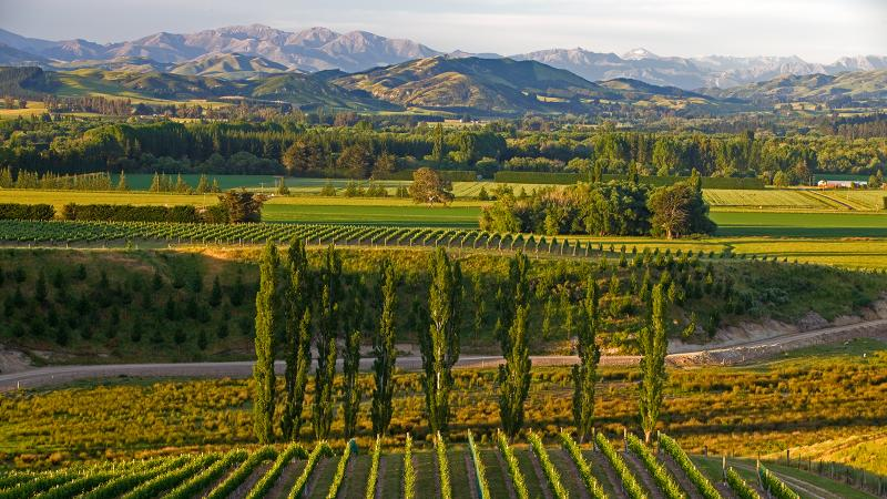 New Zealand isn't just about Sauvignon Blanc: Mt. Beautiful also makes a delicious Chardonnay.