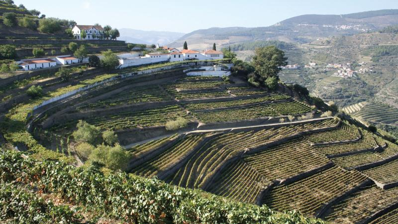 Quinta do Noval makes a range of Ports and table reds from the Douro Valley.