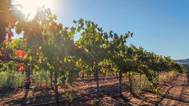Peachy Canyon in Paso Robles has made Zinfandel its signature variety.