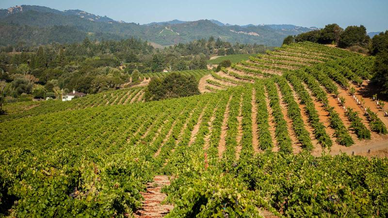 Pedroncelli makes its dry rosé from Zinfandel in Sonoma's Dry Creek Valley.
