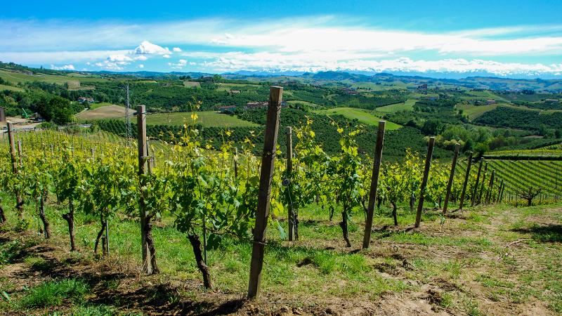The wines of Piedmont are a lot more diverse than one might think.