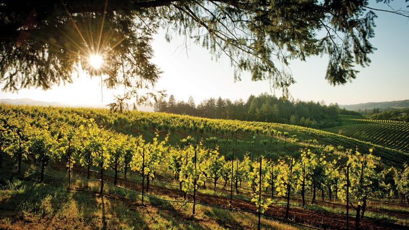 Ridge makes a range of juicy Zinfandels from across California, including Sonoma.