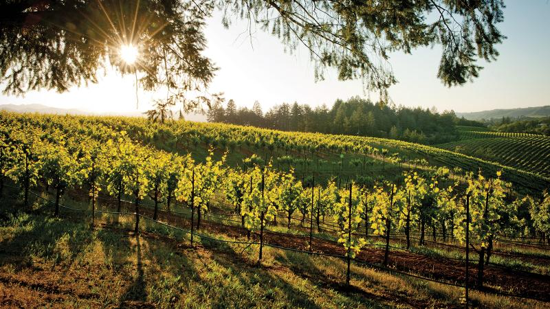 Ridge's Lytton Springs vineyard yields top Zin in Sonoma's Dry Creek Valley.