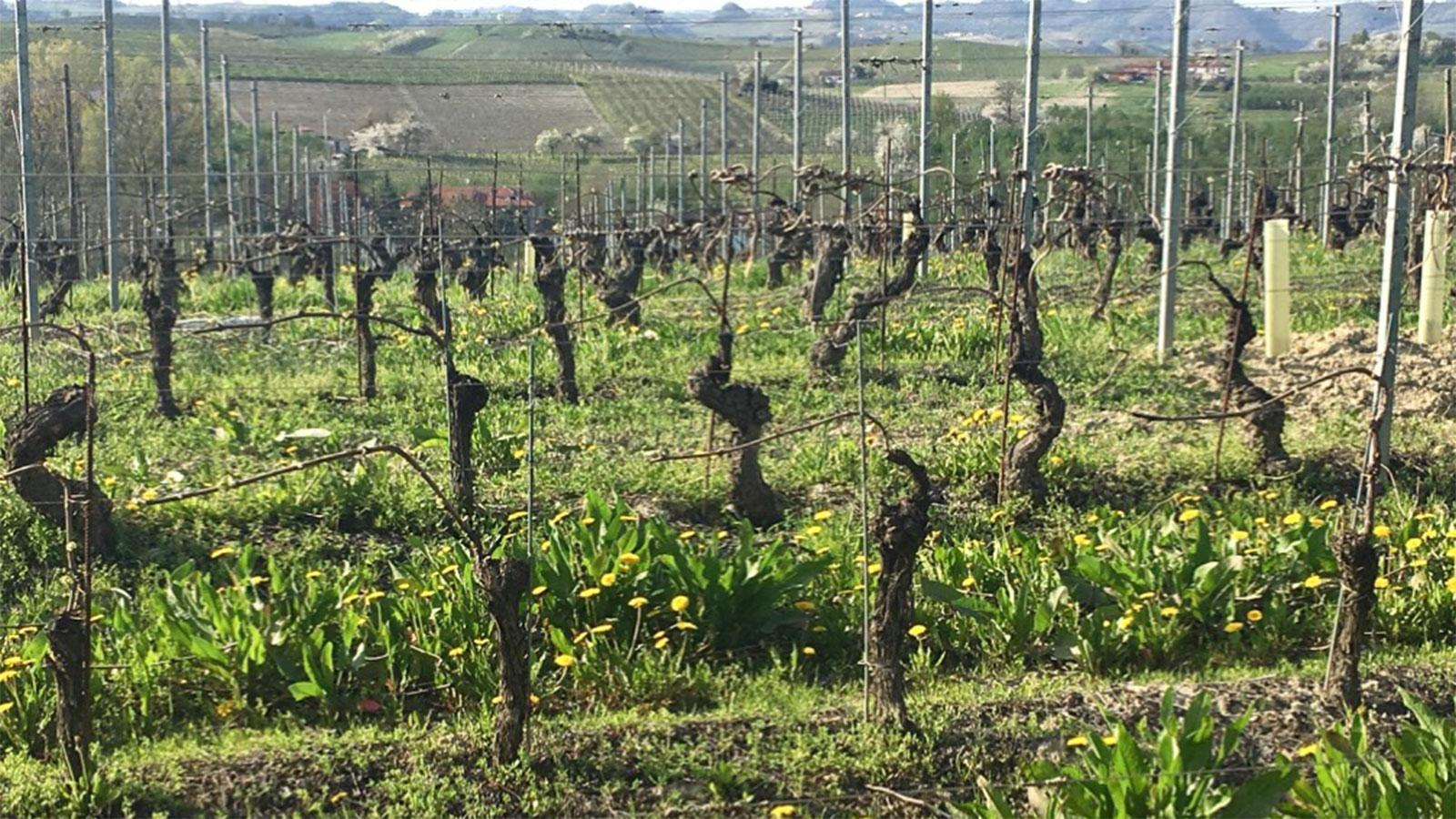 12 Barberas to Discover Now
