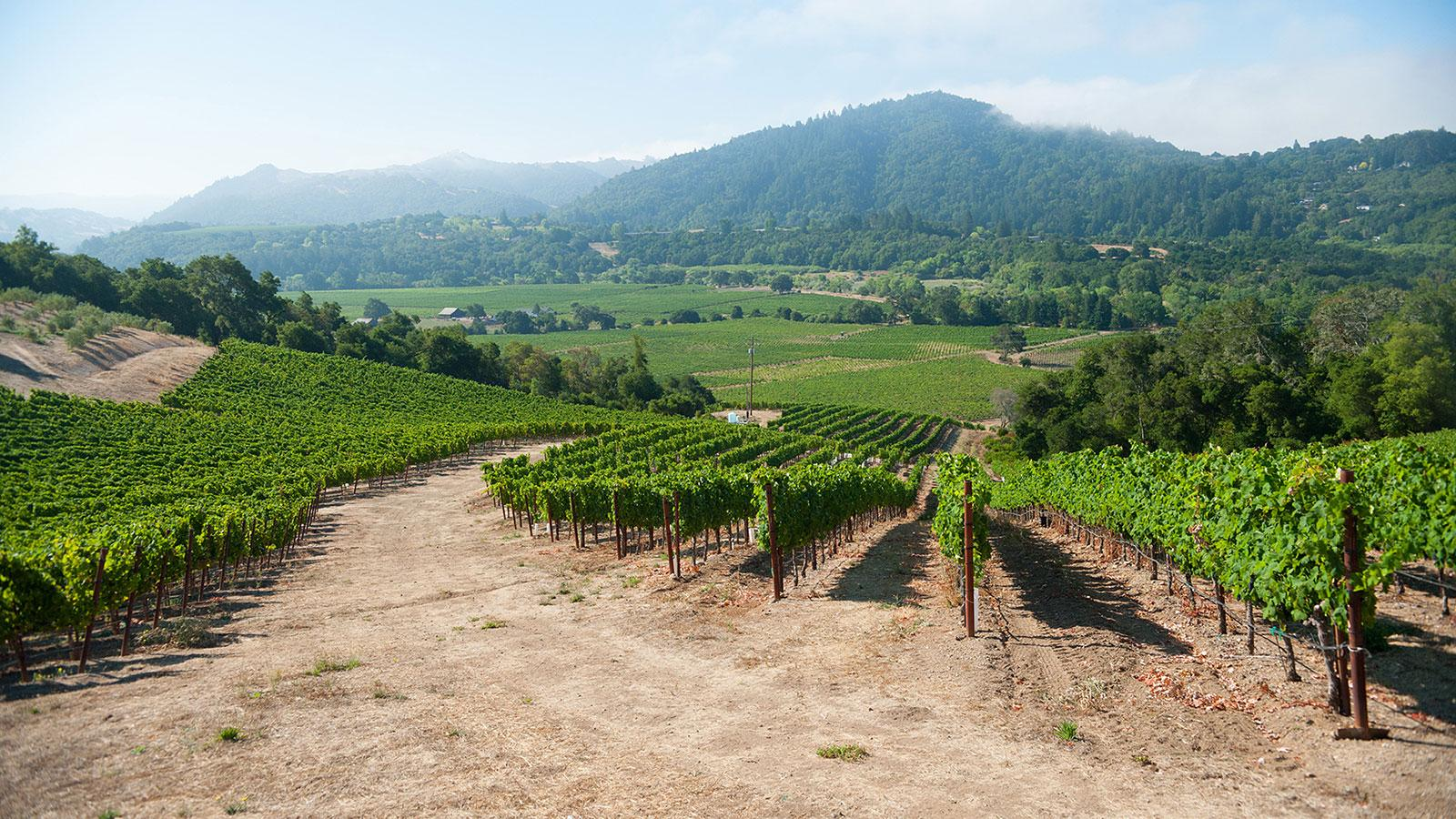 7 Sonoma Wines to Drink this Week