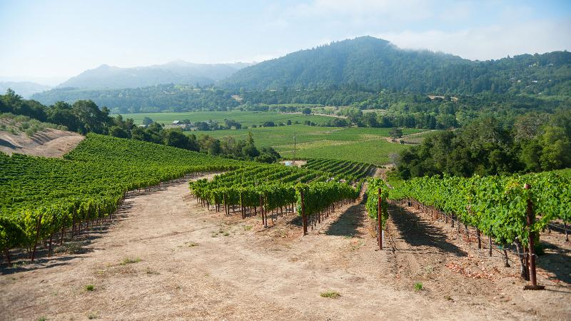 Seghesio taps vineyards across the county for its Zinfandel bottlings.