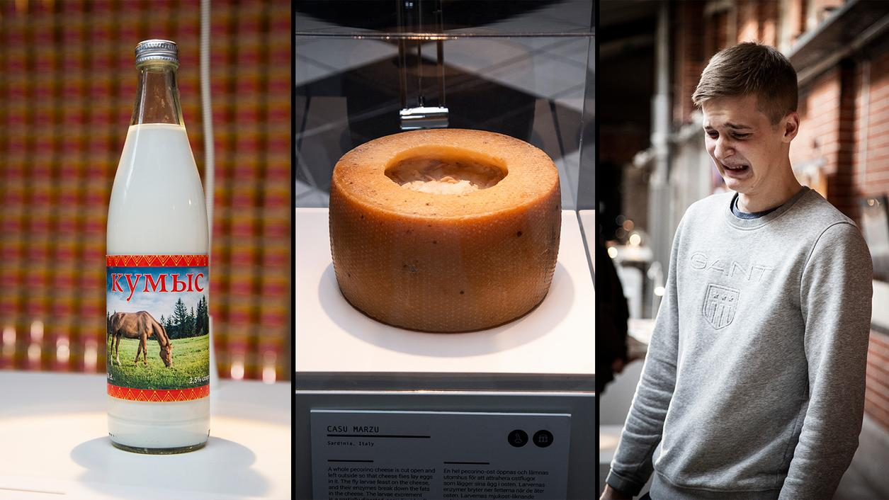 Mouse Wine? Frog Juice? New 'Disgusting Food Museum' Delights, Disgusts