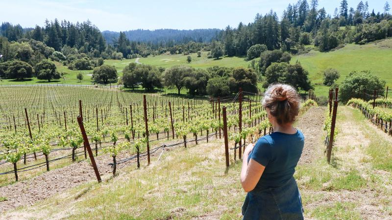 This month, Red Car winery in Sonoma is offering outdoor activities such as forest bathing, vineyard-style.