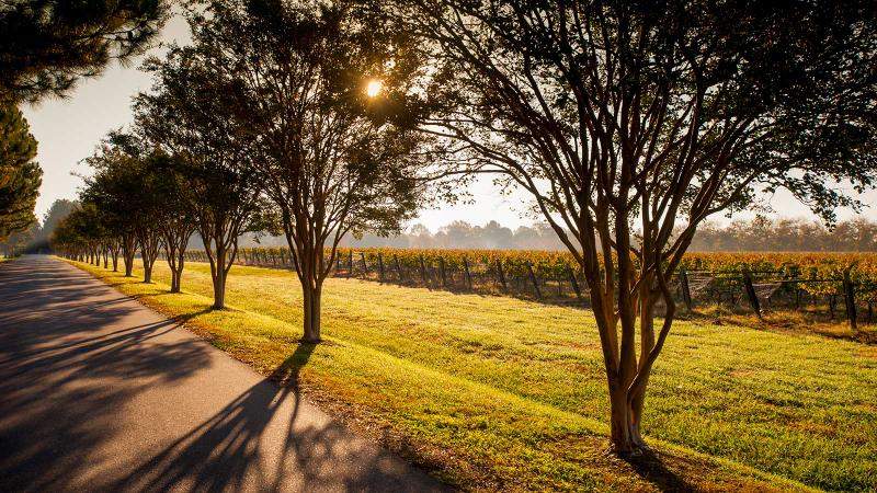 Williamsburg Winery in Virginia is a key host at the upcoming Williamsburg Taste Festival.