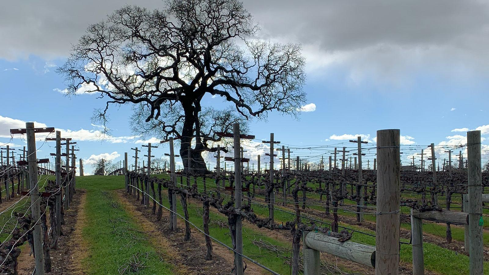 Meteor Vineyard is as jaw-dropping as its Cabernets.