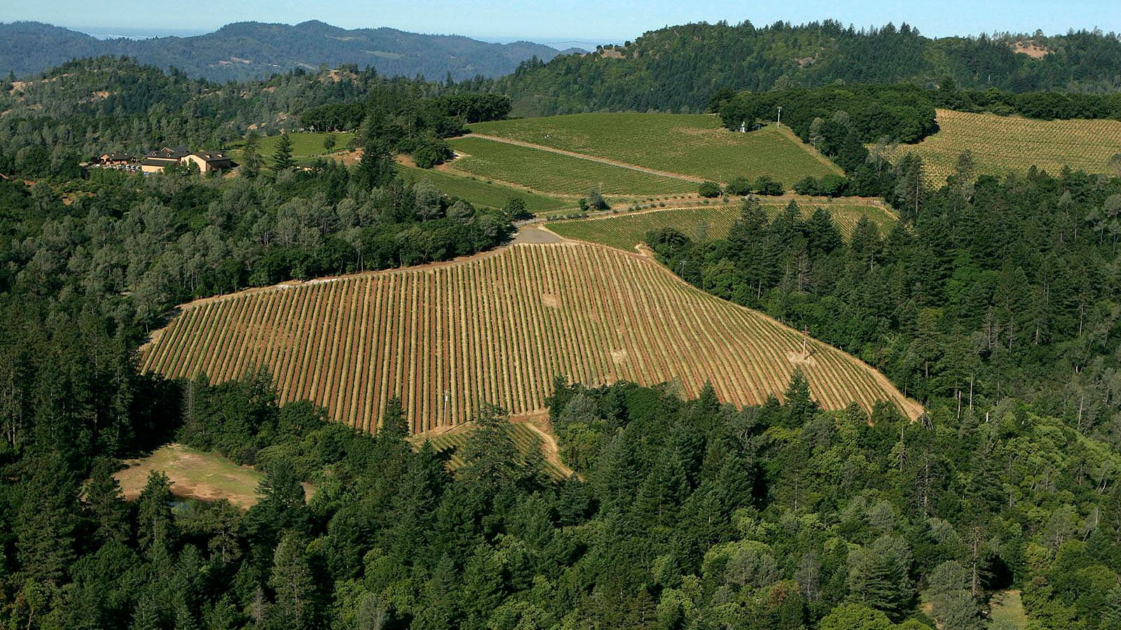 Turley's Dragon Vineyard on Howell Mountain includes a parcel planted to Cabernet Sauvignon.