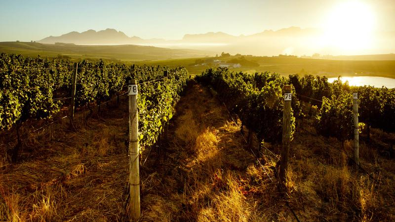 California Winery-Investment Firm Buys South Africa's Mulderbosch