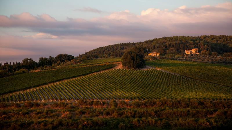Tignanello was one of the first super Tuscans, made on a hillside estate in Chianti Classico.