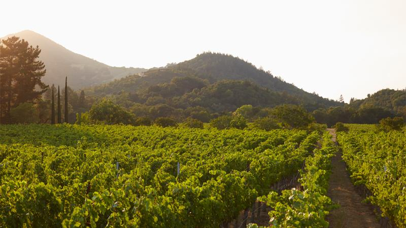 Image for an article: The To Kalon vineyard in Oakville is considered a prime spot for Cabernet, but there have been many disputes over its borders.