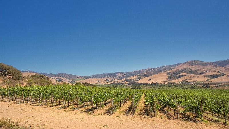 8 California Pinot Noirs at 90+ Points