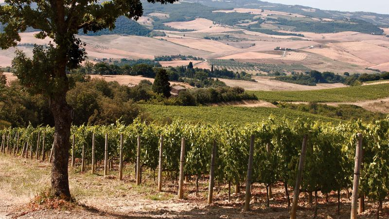 The Caparzo vineyards are in a hilly area that reaches nearly 1,000 feet above sea level.