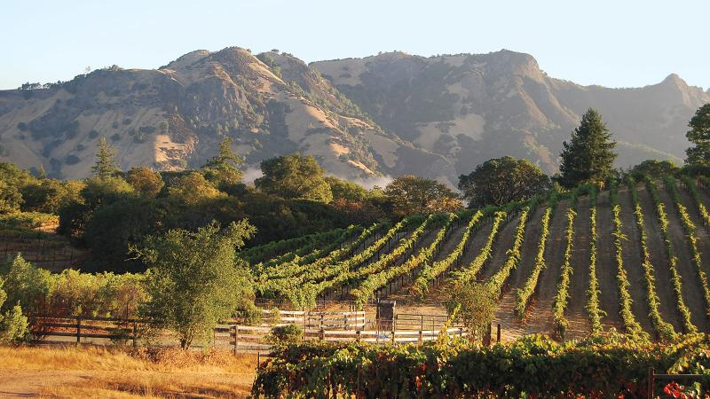 Carol Shelton winery focuses on Zinfandel from vineyards across California.