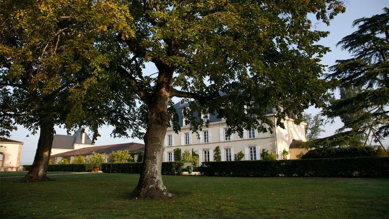 Château Guiraud is one of several Sauternes producers who also make dry white wines.