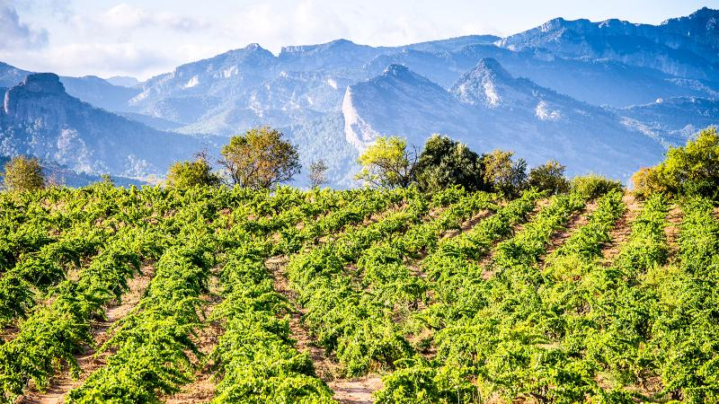 7 Fun Wines to Discover Spain