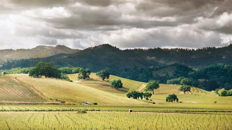 8 Napa Valley Gems at 90+ Points