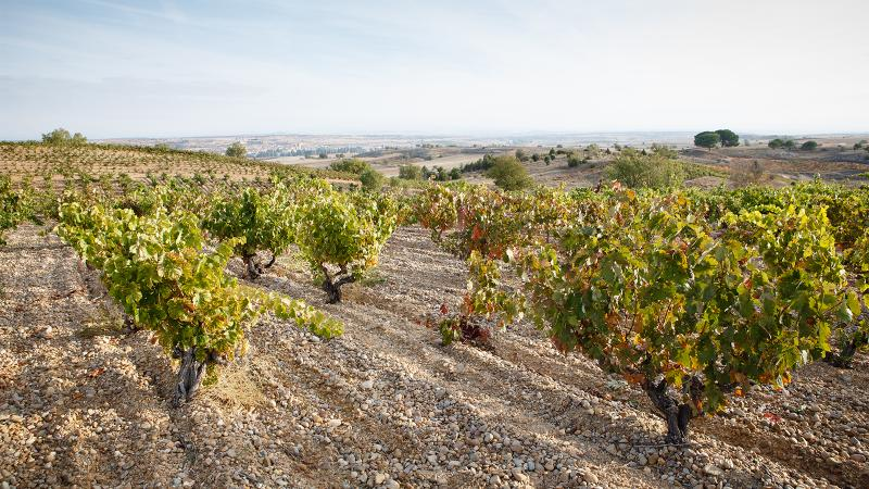 Viña Mayor sources its reserva from high-altitude vineyards with vines up to 60 years old.