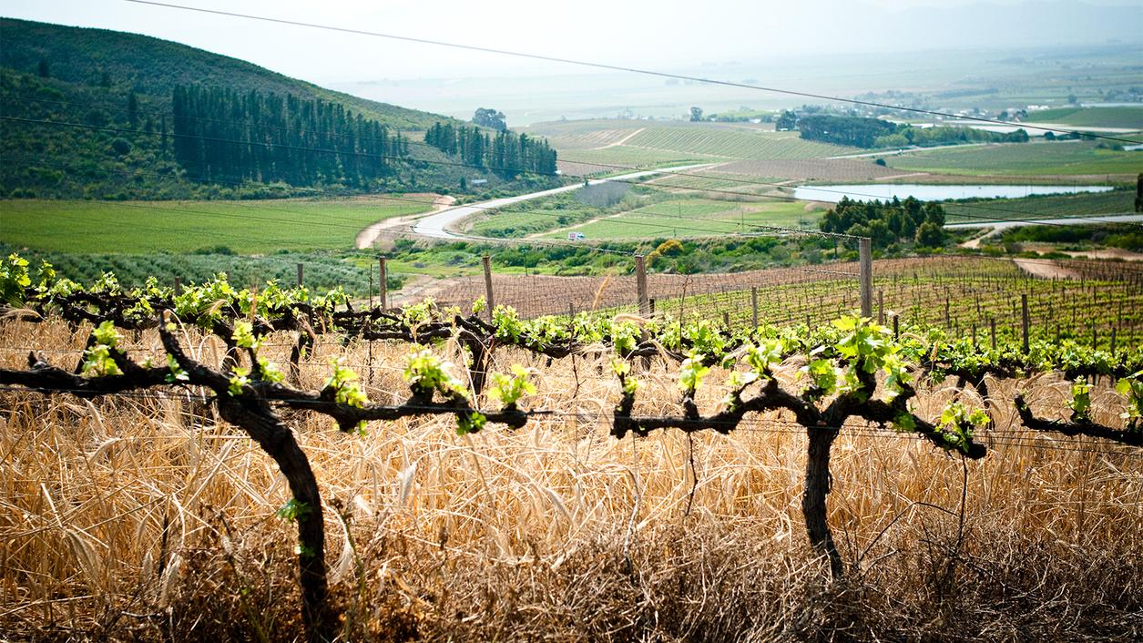 6 South African Chenin Blancs