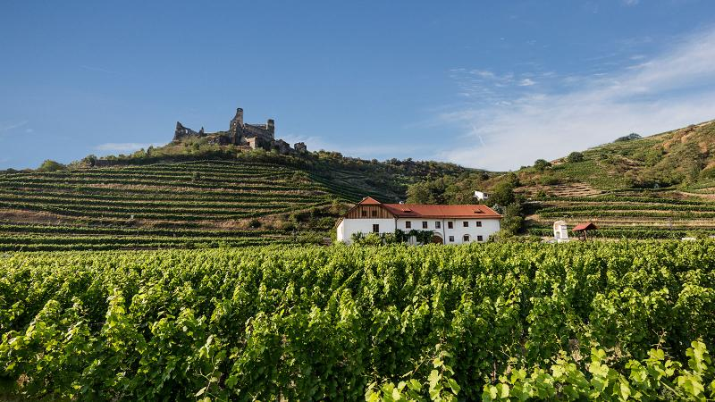 Weingut Nigl, in the Krems Valley, makes Grüner as well as Sauvignon Blanc, Riesling and other varieties.